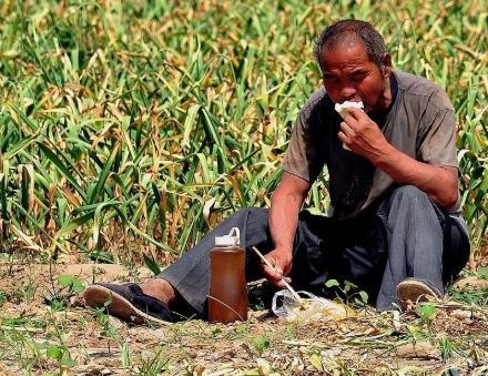 农民怎么在家挣钱?用手机在家里不用出门也能有收入