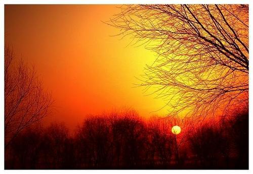 林中夕阳乃为梦