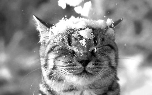 你住的城市下雪了吗